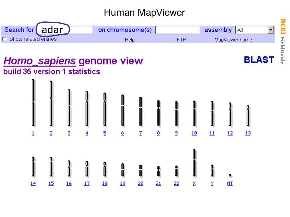 NCBI FieldGuide Human MapViewer adar
