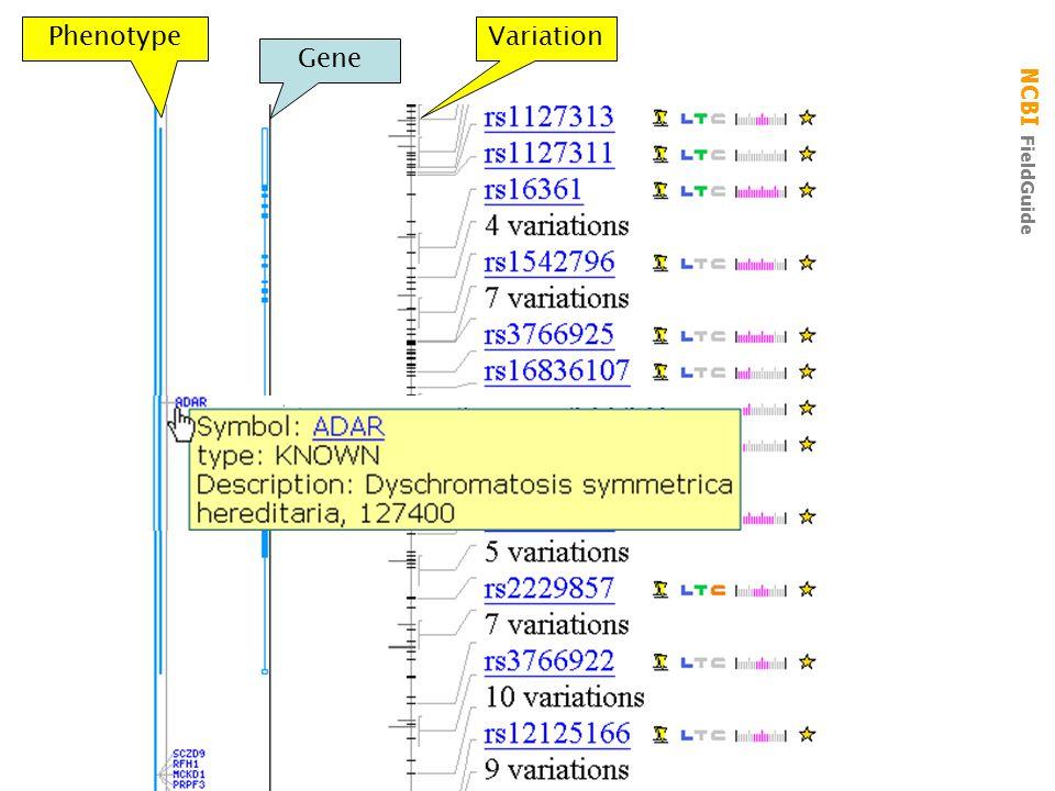 NCBI FieldGuide Gene PhenotypeVariation