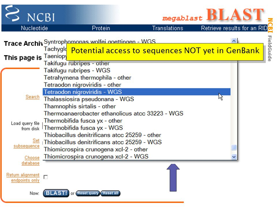 Trace Archive BLAST Page Potential access to sequences NOT yet in GenBank