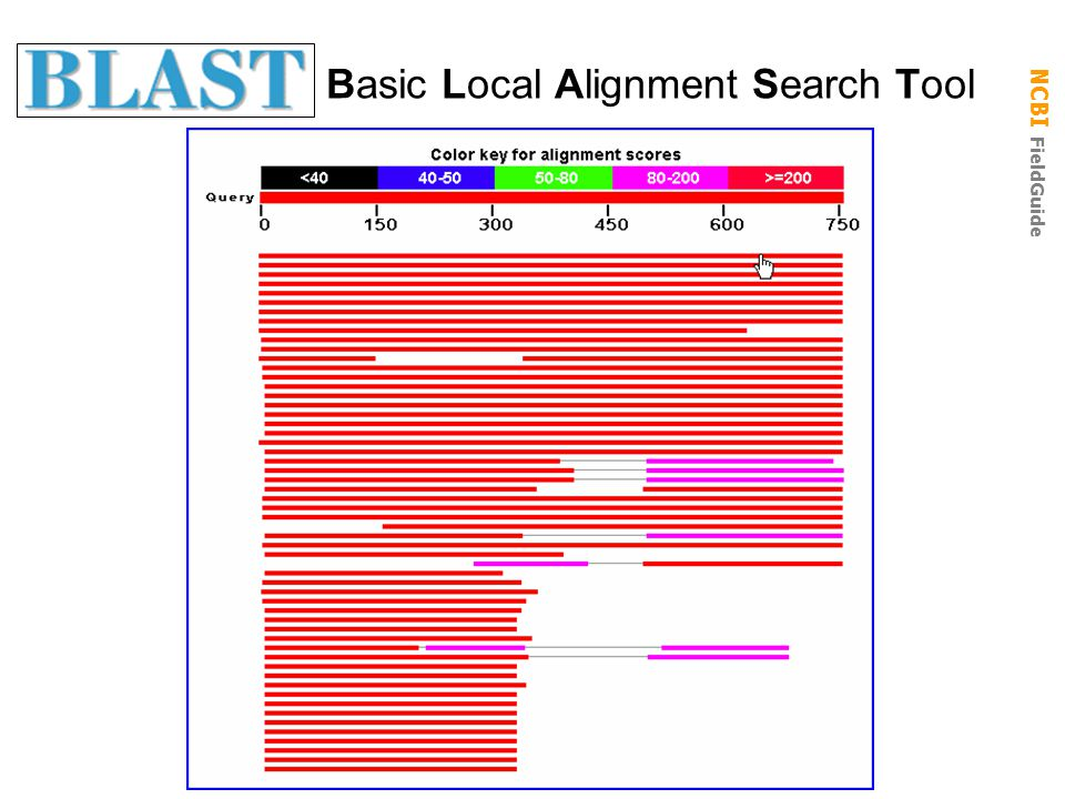 NCBI FieldGuide Basic Local Alignment Search Tool