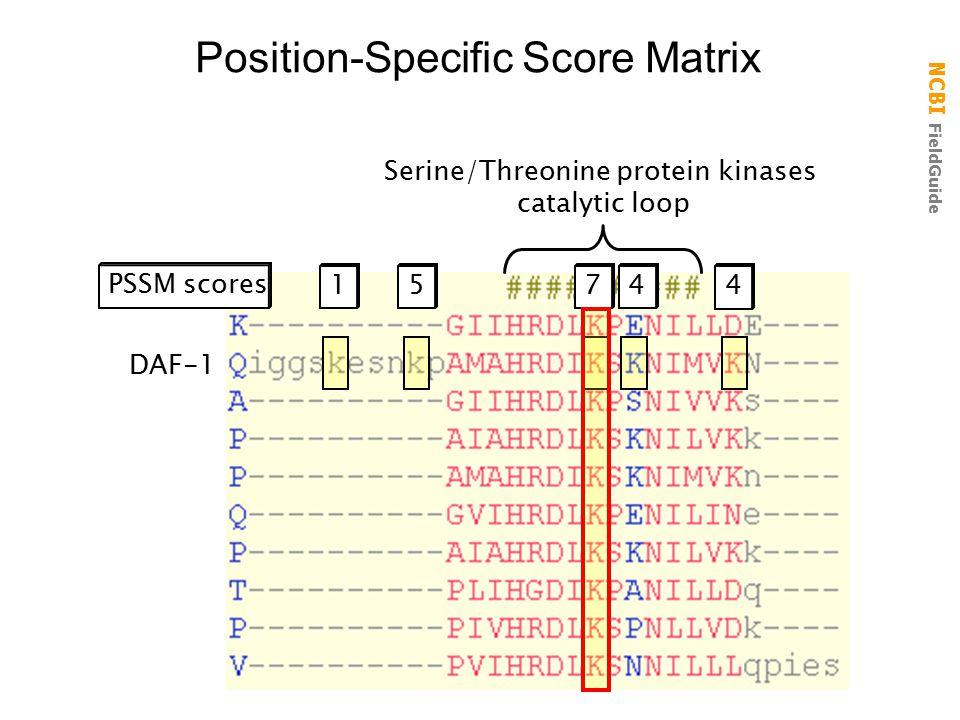 NCBI FieldGuide Position-Specific Score Matrix DAF-1 Serine/Threonine protein kinases catalytic loop 174 PSSM scores 5 4