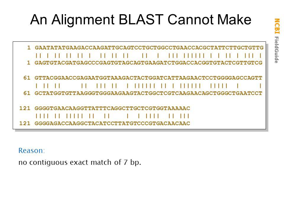 NCBI FieldGuide An Alignment BLAST Cannot Make 1 GAATATATGAAGACCAAGATTGCAGTCCTGCTGGCCTGAACCACGCTATTCTTGCTGTTG || | || || || | || || || || | ||| |||||| | | || | ||| | 1 GAGTGTACGATGAGCCCGAGTGTAGCAGTGAAGATCTGGACCACGGTGTACTCGTTGTCG 61 GTTACGGAACCGAGAATGGTAAAGACTACTGGATCATTAAGAACTCCTGGGGAGCCAGTT | || || || ||| || | |||||| || | |||||| ||||| | | 61 GCTATGGTGTTAAGGGTGGGAAGAAGTACTGGCTCGTCAAGAACAGCTGGGCTGAATCCT 121 GGGGTGAACAAGGTTATTTCAGGCTTGCTCGTGGTAAAAAC |||| || ||||| || || | | |||| || ||| 121 GGGGAGACCAAGGCTACATCCTTATGTCCCGTGACAACAAC 1 GAATATATGAAGACCAAGATTGCAGTCCTGCTGGCCTGAACCACGCTATTCTTGCTGTTG || | || || || | || || || || | ||| |||||| | | || | ||| | 1 GAGTGTACGATGAGCCCGAGTGTAGCAGTGAAGATCTGGACCACGGTGTACTCGTTGTCG 61 GTTACGGAACCGAGAATGGTAAAGACTACTGGATCATTAAGAACTCCTGGGGAGCCAGTT | || || || ||| || | |||||| || | |||||| ||||| | | 61 GCTATGGTGTTAAGGGTGGGAAGAAGTACTGGCTCGTCAAGAACAGCTGGGCTGAATCCT 121 GGGGTGAACAAGGTTATTTCAGGCTTGCTCGTGGTAAAAAC |||| || ||||| || || | | |||| || ||| 121 GGGGAGACCAAGGCTACATCCTTATGTCCCGTGACAACAAC Reason: no contiguous exact match of 7 bp.