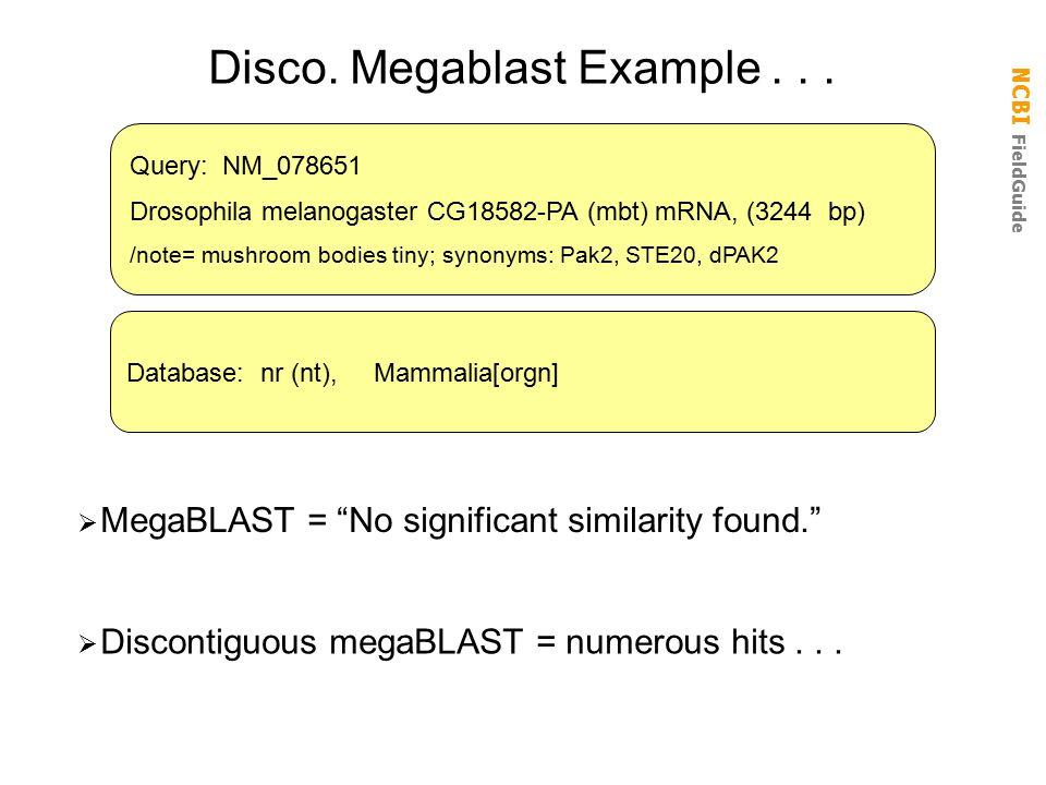 NCBI FieldGuide Disco.Megablast Example...  Discontiguous megaBLAST = numerous hits...