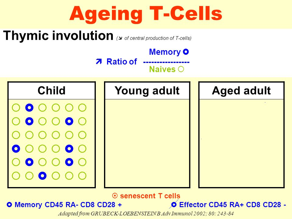 Ageing T-Cells Thymic involution (  of central production of T-cells) Memory   Ratio of ----------------- Naives  Adapted from GRUBECK-LOEBENSTEIN