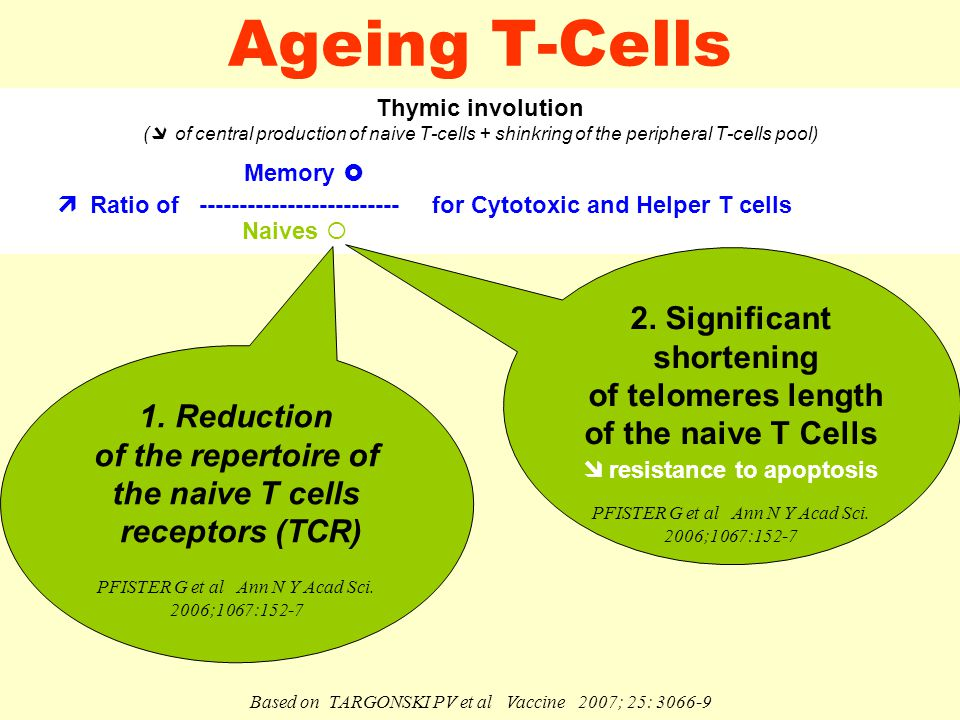 Ageing T-Cells Thymic involution (  of central production of naive T-cells + shinkring of the peripheral T-cells pool) Memory   Ratio of ------------------------- for Cytotoxic and Helper T cells Naives  1.
