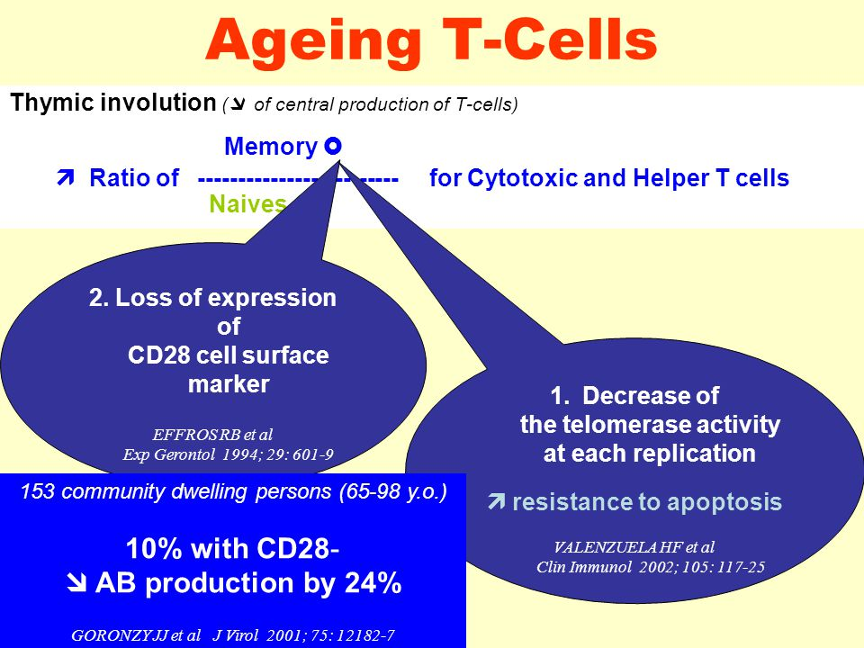 Ageing T-Cells Thymic involution (  of central production of T-cells) Memory   Ratio of ------------------------- for Cytotoxic and Helper T cells Naives  2.