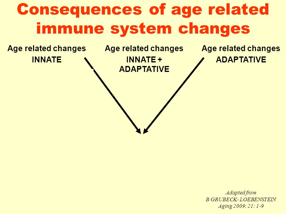 Consequences of age related immune system changes Age related changes INNATE Age related changes INNATE + ADAPTATIVE Age related changes ADAPTATIVE Al