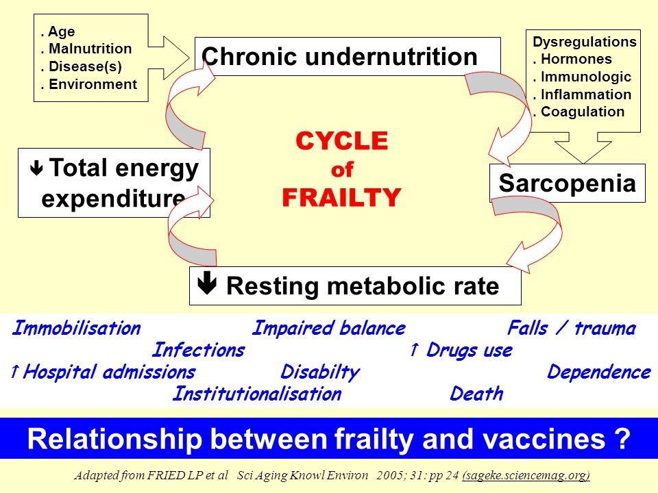 Adapted from FRIED LP et al Sci Aging Knowl Environ 2005; 31: pp 24 (sageke.sciencemag.org) Sarcopenia  Total energy expenditure CYCLE of FRAILTY Chronic undernutrition.