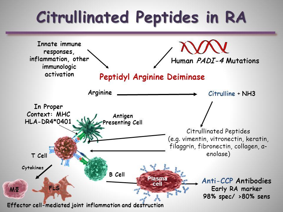 Human PADI-4 Mutations Arginine Citrulline + NH3 Citrullinated Peptides (e.g.