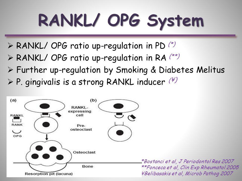 RANKL/ OPG System  RANKL/ OPG ratio up-regulation in PD (*)  RANKL/ OPG ratio up-regulation in RA (**)  Further up-regulation by Smoking & Diabetes Melitus  P.