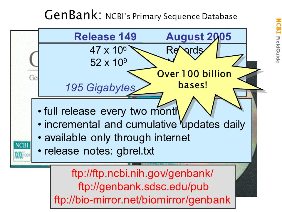 NCBI FieldGuide GenBank: NCBI's Primary Sequence Database ftp://ftp.ncbi.nih.gov/genbank/ ftp://genbank.sdsc.edu/pub ftp://bio-mirror.net/biomirror/genbank Release 149 August 2005 47 x 10 6 Records 52 x 10 9 Nucleotides 195 Gigabytes 816 files full release every two months incremental and cumulative updates daily available only through internet release notes: gbrel.txt Over 100 billion bases.