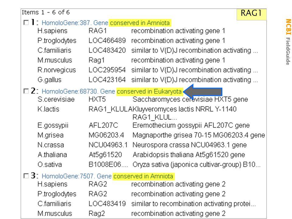 NCBI FieldGuide RAG1 Sugar_tr