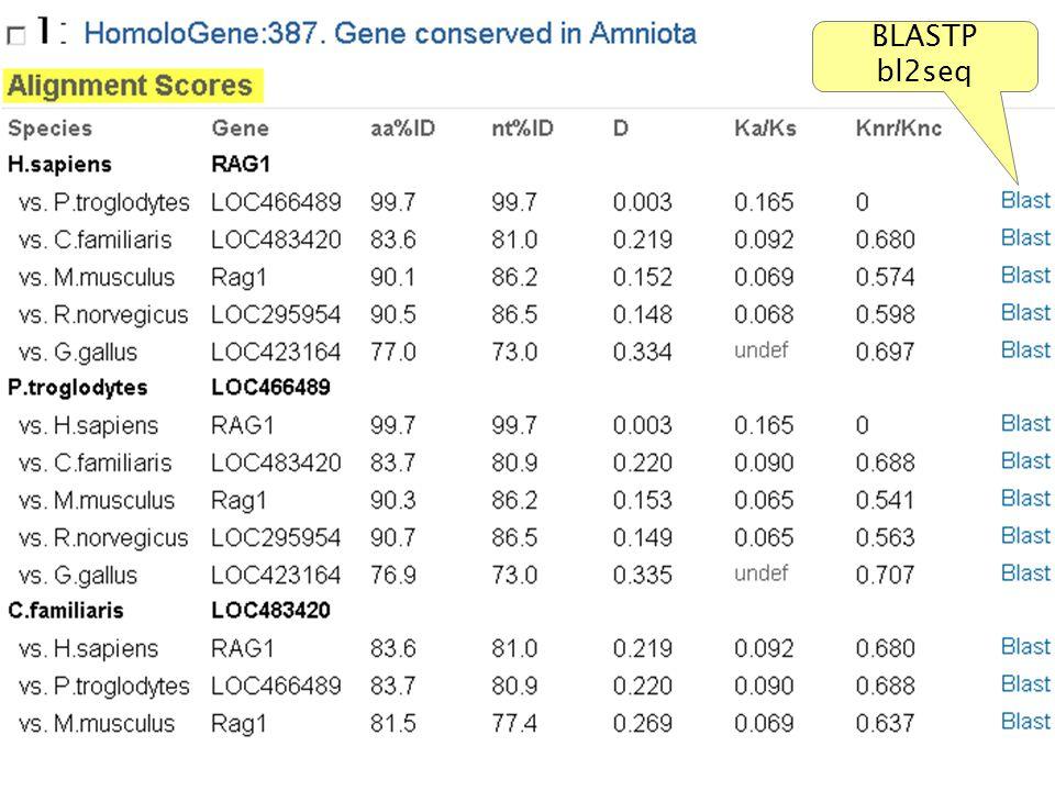 NCBI FieldGuide BLASTP bl2seq