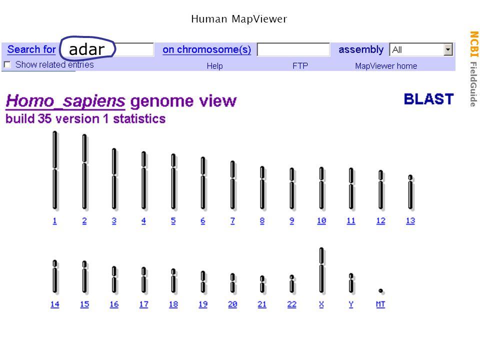NCBI FieldGuide MapViewer: Human ADAR