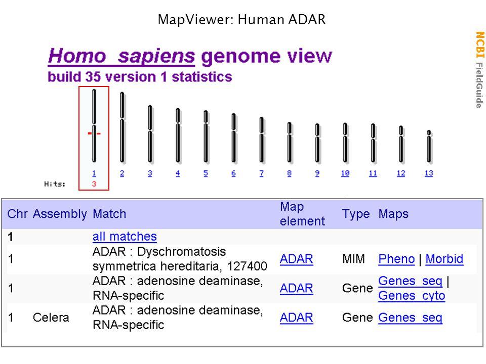 NCBI FieldGuide MV Hs ADAR 3' UTR 5' UTR