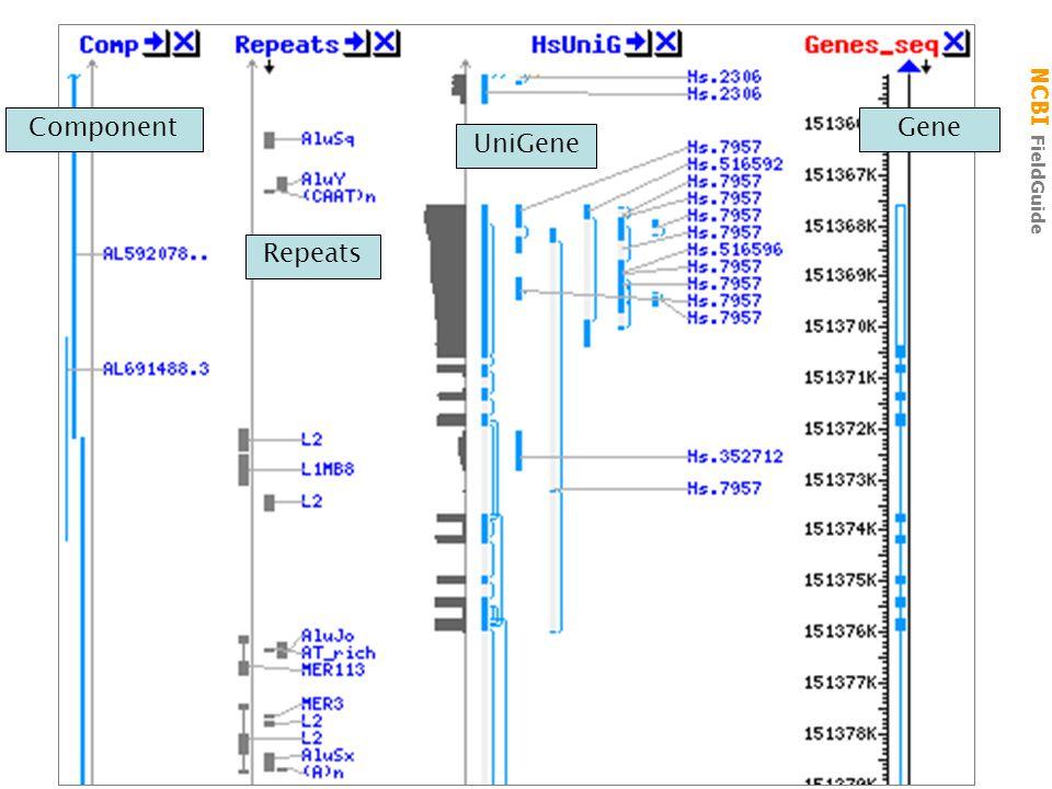 NCBI FieldGuide MapViewer UniGene Component Repeats Gene