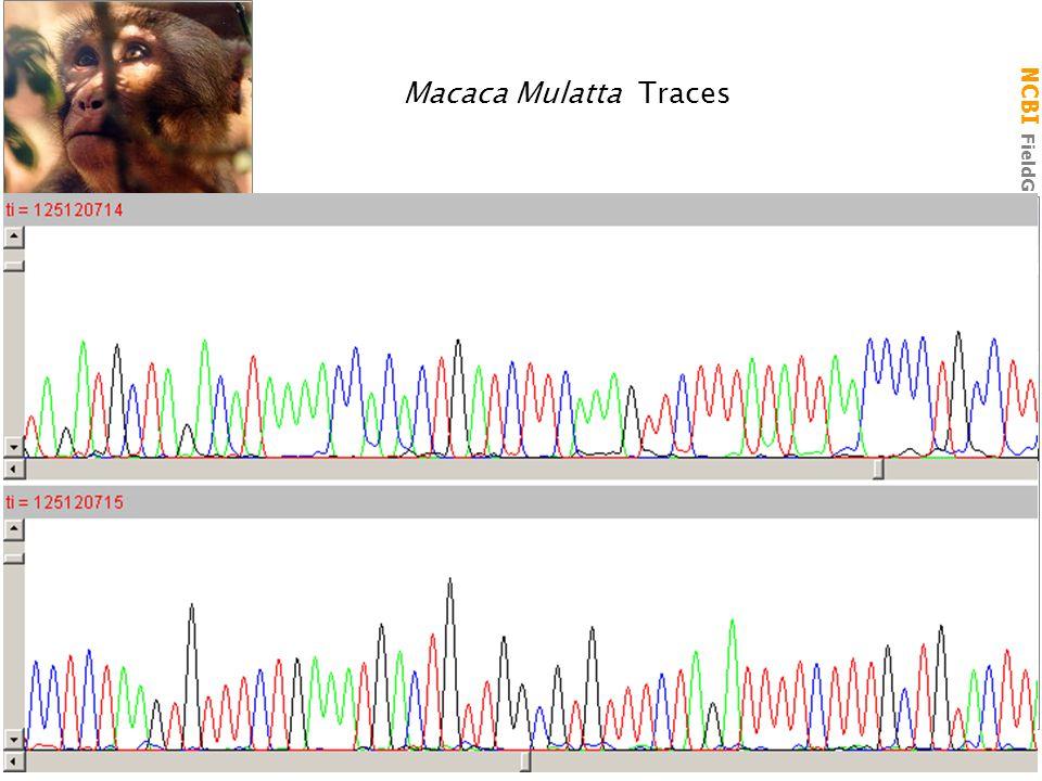 NCBI FieldGuide Macaca Mulatta Traces