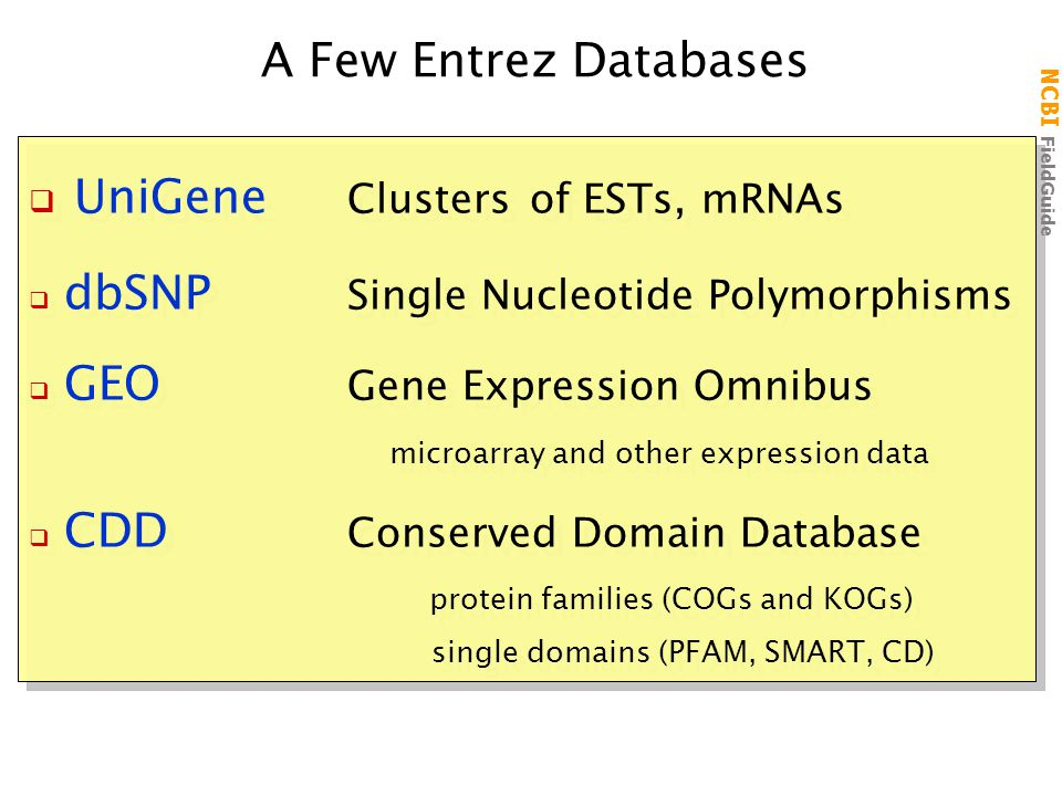 NCBI FieldGuide A Few Entrez Databases  UniGene Clusters of ESTs, mRNAs  dbSNP Single Nucleotide Polymorphisms  GEO Gene Expression Omnibus microarray and other expression data  CDD Conserved Domain Database protein families (COGs and KOGs) single domains (PFAM, SMART, CD)  UniGene Clusters of ESTs, mRNAs  dbSNP Single Nucleotide Polymorphisms  GEO Gene Expression Omnibus microarray and other expression data  CDD Conserved Domain Database protein families (COGs and KOGs) single domains (PFAM, SMART, CD)