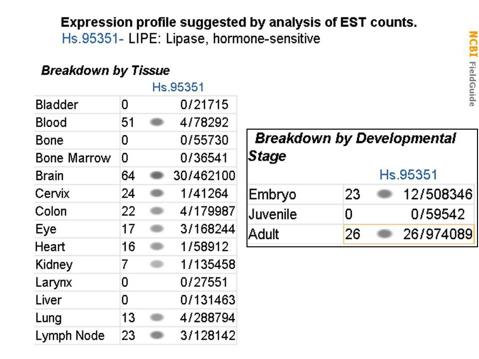 NCBI FieldGuide UniGene Cluster Hs.95351: expression