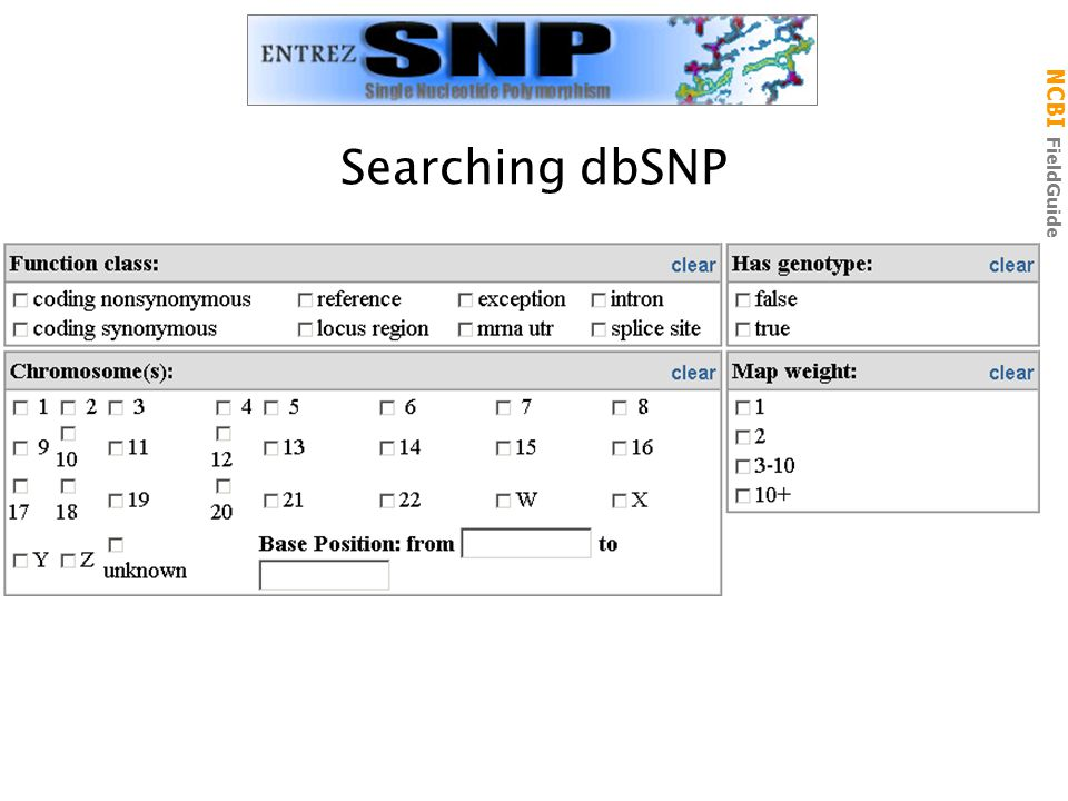 NCBI FieldGuide Searching dbSNP