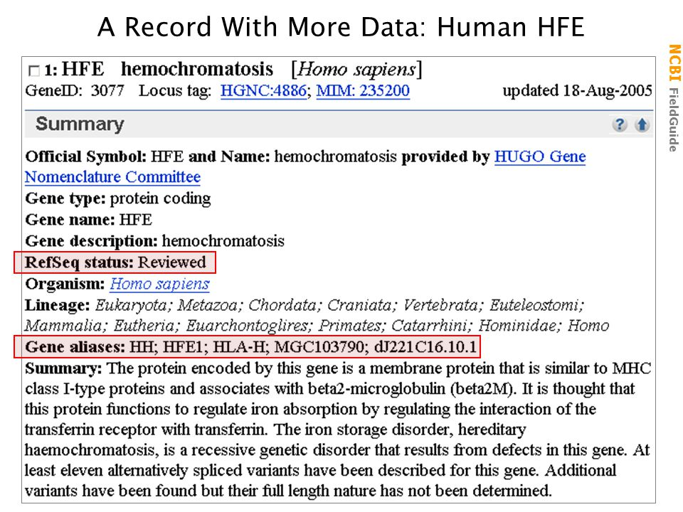 NCBI FieldGuide A Record With More Data: Human HFE