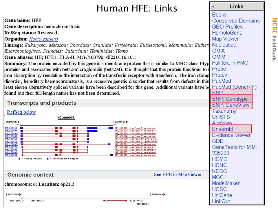 NCBI FieldGuide Human HFE: Links