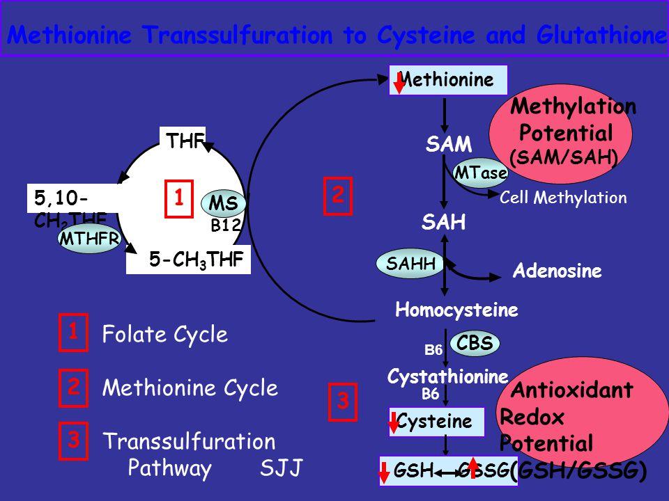 SAM SAH MTase SAHH Homocysteine B6 CBS Methionine Transsulfuration to Cysteine and Glutathione Cystathionine Cysteine GSH GSSG Methionine Adenosine B6 5-CH 3 THF THF B12 MS 5,10- CH 2 THF MTHFR Cell Methylation 1 1 2 3 Folate Cycle Methionine Cycle Transsulfuration Pathway SJJ Methylation Potential (SAM/SAH) 2 3 Antioxidant Redox Potential (GSH/GSSG)