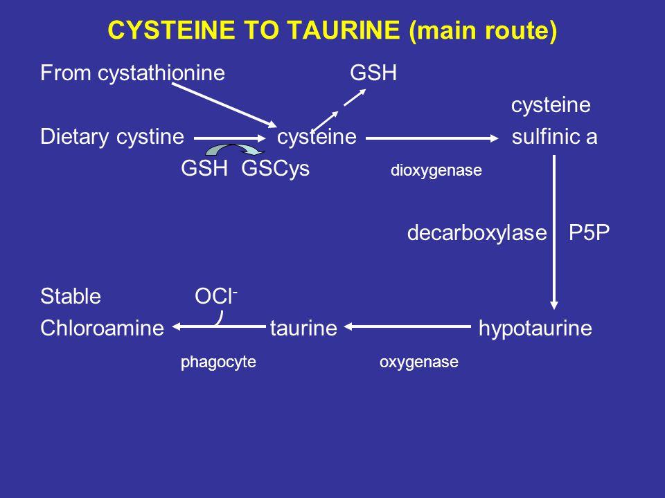 CYSTEINE TO TAURINE (main route) From cystathionine GSH cysteine Dietary cystine cysteine sulfinic a GSH GSCys dioxygenase decarboxylase P5P Stable OCl - Chloroamine taurine hypotaurine phagocyte oxygenase