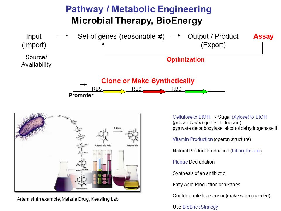Input (Import) Output / Product (Export) AssaySet of genes (reasonable #) Clone or Make Synthetically Source/ Availability RBS Pathway / Metabolic Eng