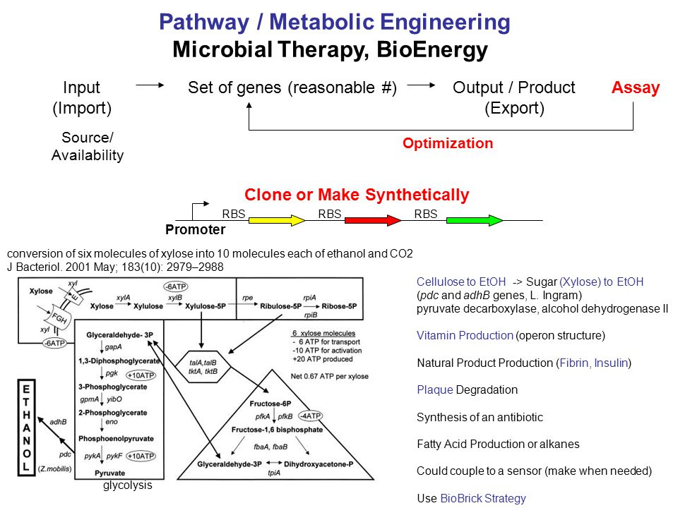 Input (Import) Output / Product (Export) AssaySet of genes (reasonable #) Source/ Availability Pathway / Metabolic Engineering Microbial Therapy, BioE