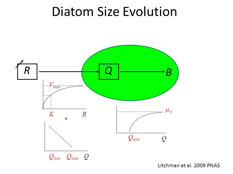 Diatom Size Evolution B QR Litchman et al. 2009 PNAS Q min  Q V max KR QQ max Q min ×