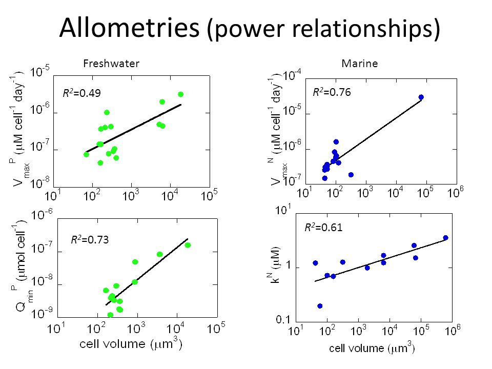 Allometries (power relationships) FreshwaterMarine R 2 =0.49 R 2 =0.73 R 2 =0.76 R 2 =0.61