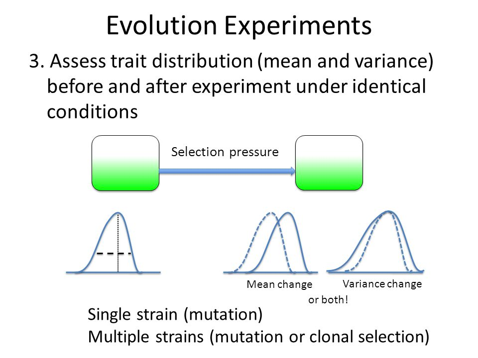 Evolution Experiments 3. Assess trait distribution (mean and variance) before and after experiment under identical conditions Selection pressure Mean