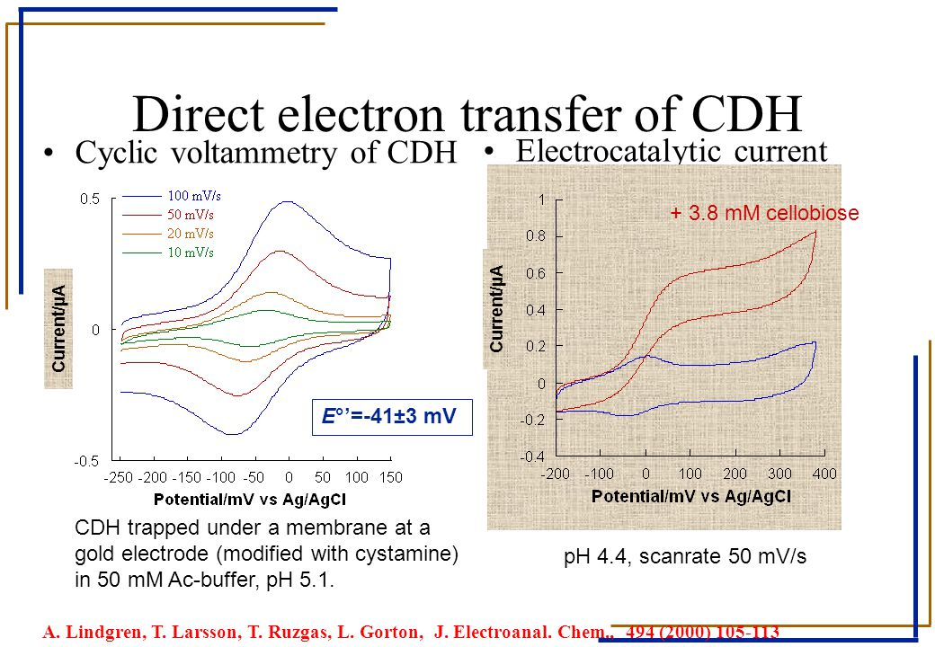 Direct electron transfer of CDH Electrocatalytic current Cyclic voltammetry of CDH CDH trapped under a membrane at a gold electrode (modified with cys