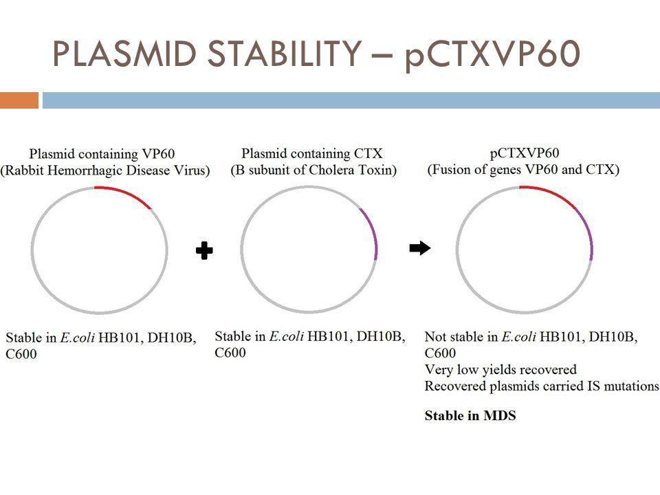 PLASMID STABILITY – pCTXVP60