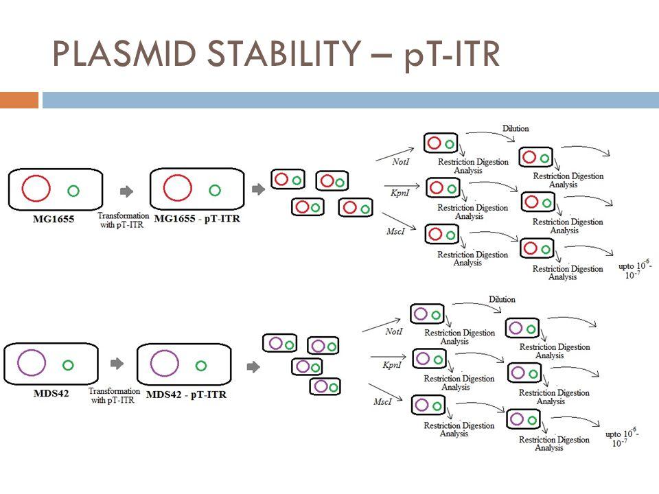 PLASMID STABILITY – pT-ITR