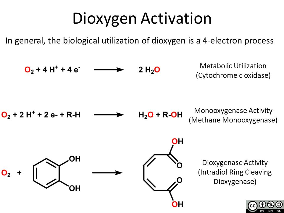 Dioxygen Activation In general, the biological utilization of dioxygen is a 4-electron process Metabolic Utilization (Cytochrome c oxidase) Monooxygenase Activity (Methane Monooxygenase) Dioxygenase Activity (Intradiol Ring Cleaving Dioxygenase)