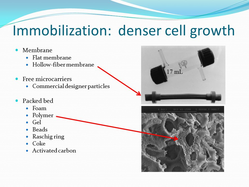 Immobilization: denser cell growth Membrane Flat membrane Hollow-fiber membrane Free microcarriers Commercial designer particles Packed bed Foam Polymer Gel Beads Raschig ring Coke Activated carbon 17 mL