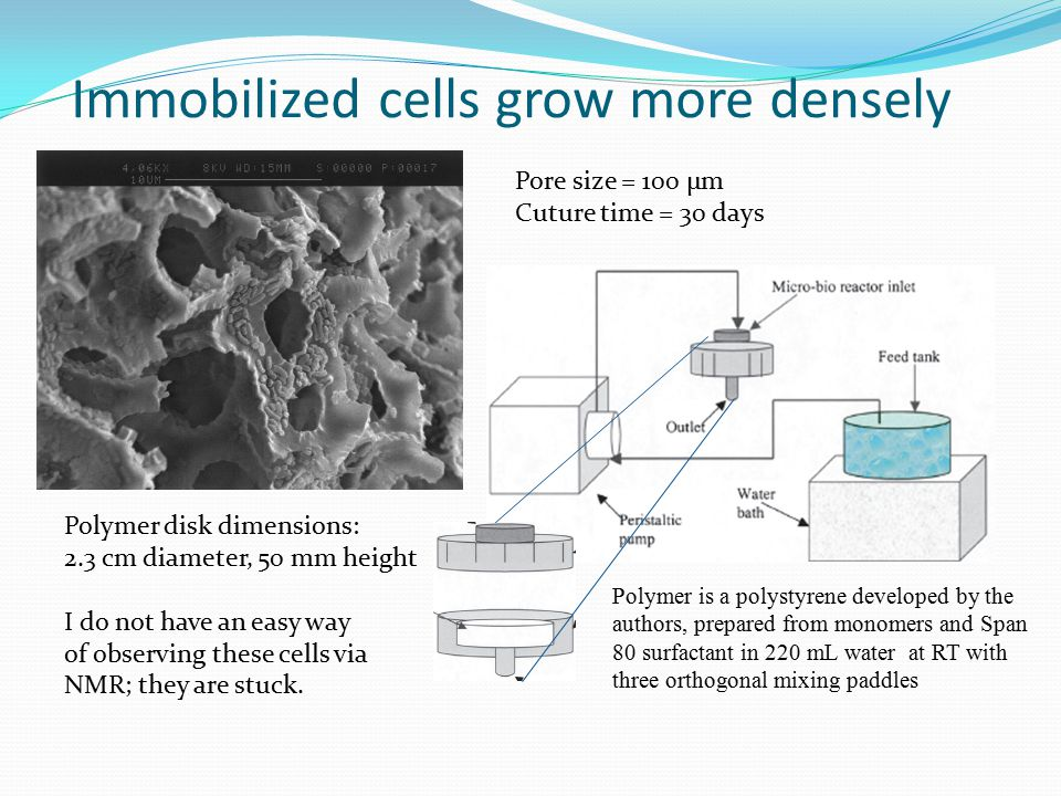 Immobilized cells grow more densely Pore size = 100 μm Cuture time = 30 days Polymer disk dimensions: 2.3 cm diameter, 50 mm height I do not have an easy way of observing these cells via NMR; they are stuck.