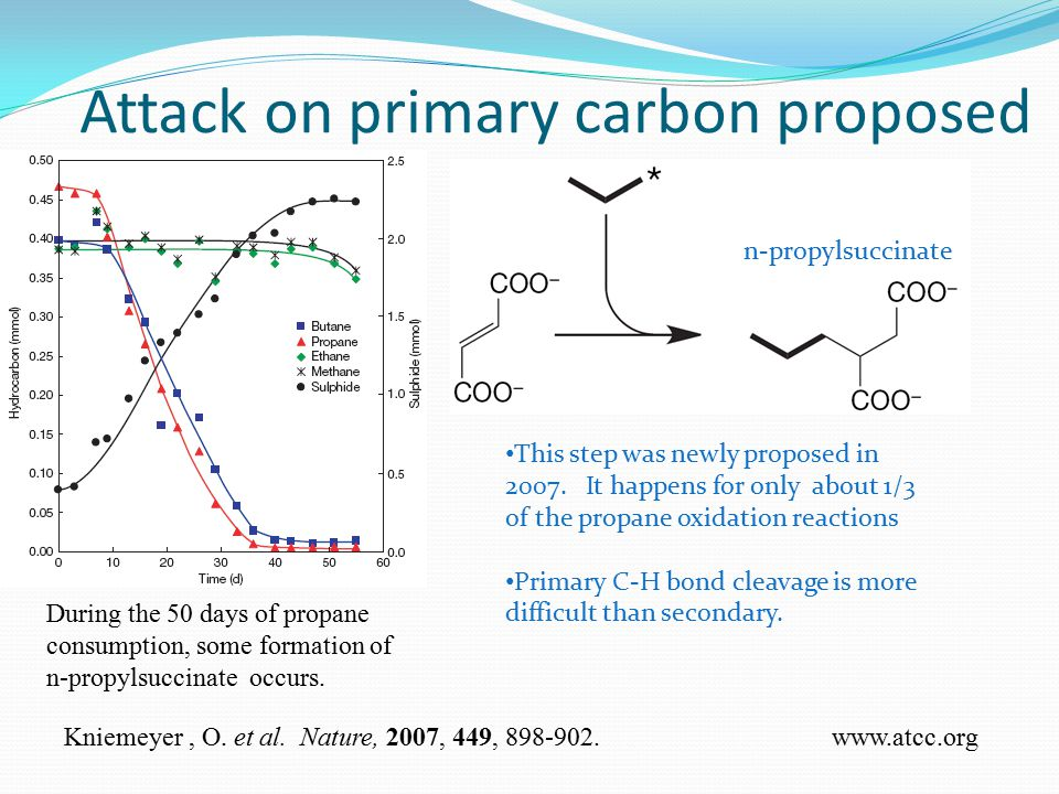 Attack on primary carbon proposed During the 50 days of propane consumption, some formation of n-propylsuccinate occurs.