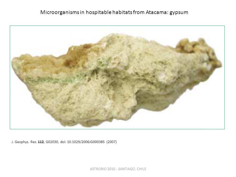 Microorganisms in hospitable habitats from Atacama: gypsum ASTROBIO 2010 - SANTIAGO, CHILE J.
