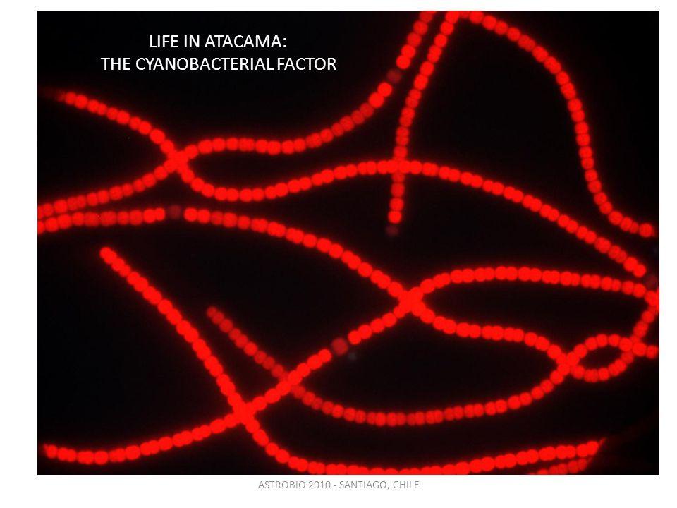 ASTROBIO 2010 - SANTIAGO, CHILE LIFE IN ATACAMA: THE CYANOBACTERIAL FACTOR