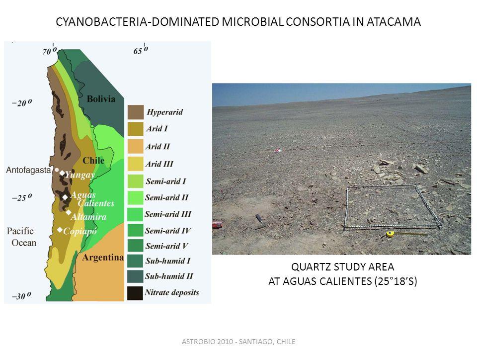 ASTROBIO 2010 - SANTIAGO, CHILE CYANOBACTERIA-DOMINATED MICROBIAL CONSORTIA IN ATACAMA QUARTZ STUDY AREA AT AGUAS CALIENTES (25°18'S)