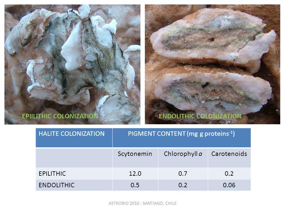 ASTROBIO 2010 - SANTIAGO, CHILE HALITE COLONIZATIONPIGMENT CONTENT (mg g proteins -1 ) ScytoneminChlorophyll aCarotenoids EPILITHIC12.00.70.2 ENDOLITHIC0.50.20.06 EPIILITHIC COLONIZATIONENDOLITHIC COLONIZATION