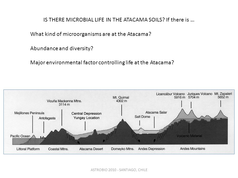IS THERE MICROBIAL LIFE IN THE ATACAMA SOILS.