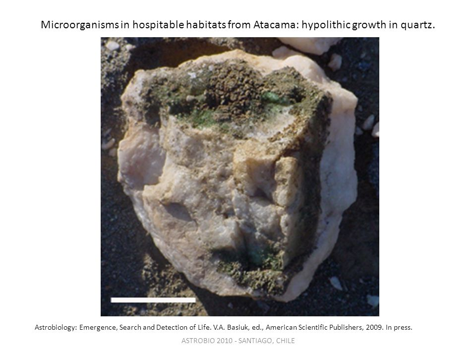 Microorganisms in hospitable habitats from Atacama: hypolithic growth in quartz.