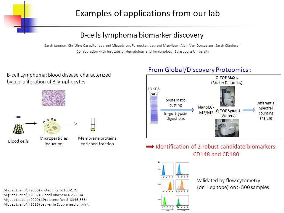 B-cells lymphoma biomarker discovery Examples of applications from our lab Sarah Lennon, Christine Carapito, Laurent Miguet, Luc Fornecker, Laurent Mauvieux, Alain Van Dorsselaer, Sarah Cianferani Collaboration with Institute of Hematology and Immunology, Strasbourg University Miguet L.