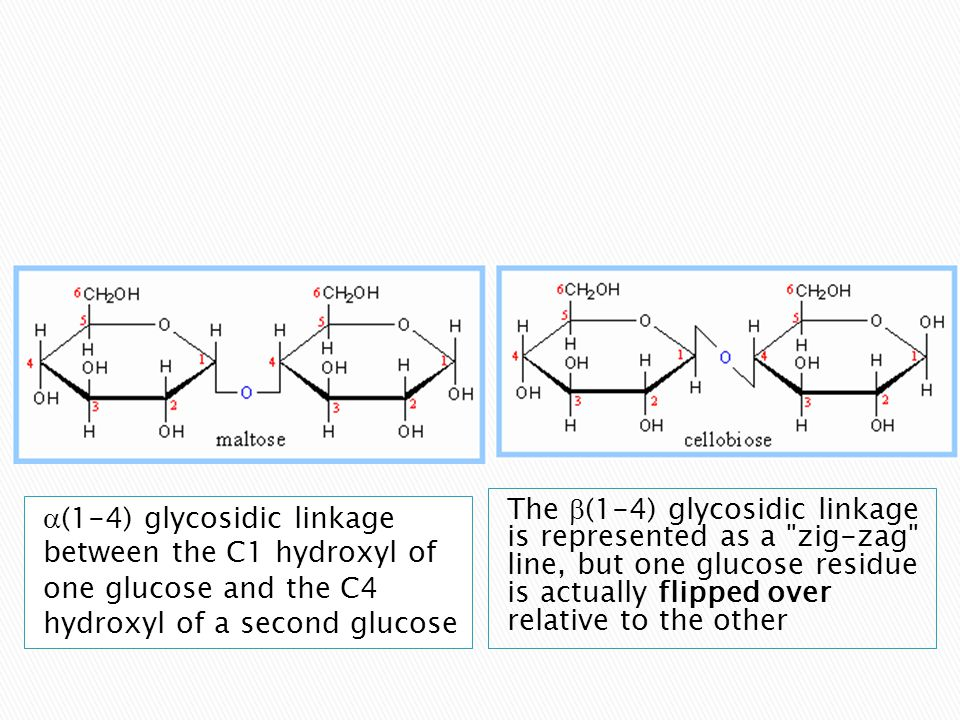The  (1-4) glycosidic linkage is represented as a zig-zag line, but one glucose residue is actually flipped over relative to the other  (1-4) glycosidic linkage between the C1 hydroxyl of one glucose and the C4 hydroxyl of a second glucose