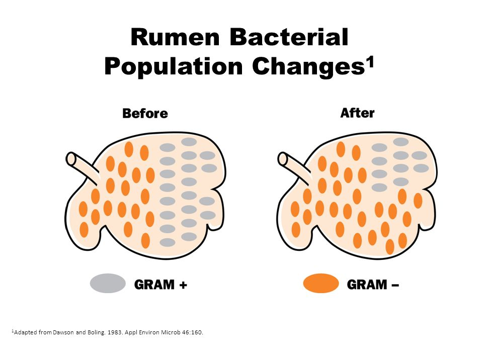 Rumen Bacterial Population Changes 1 1 Adapted from Dawson and Boling.