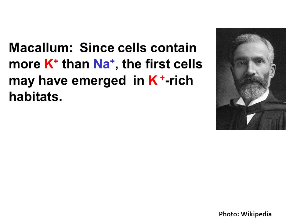 Photo: Wikipedia Macallum: Since cells contain more K + than Na +, the first cells may have emerged in K + -rich habitats.